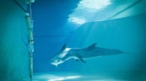 Delfiinejä delfinaariossa